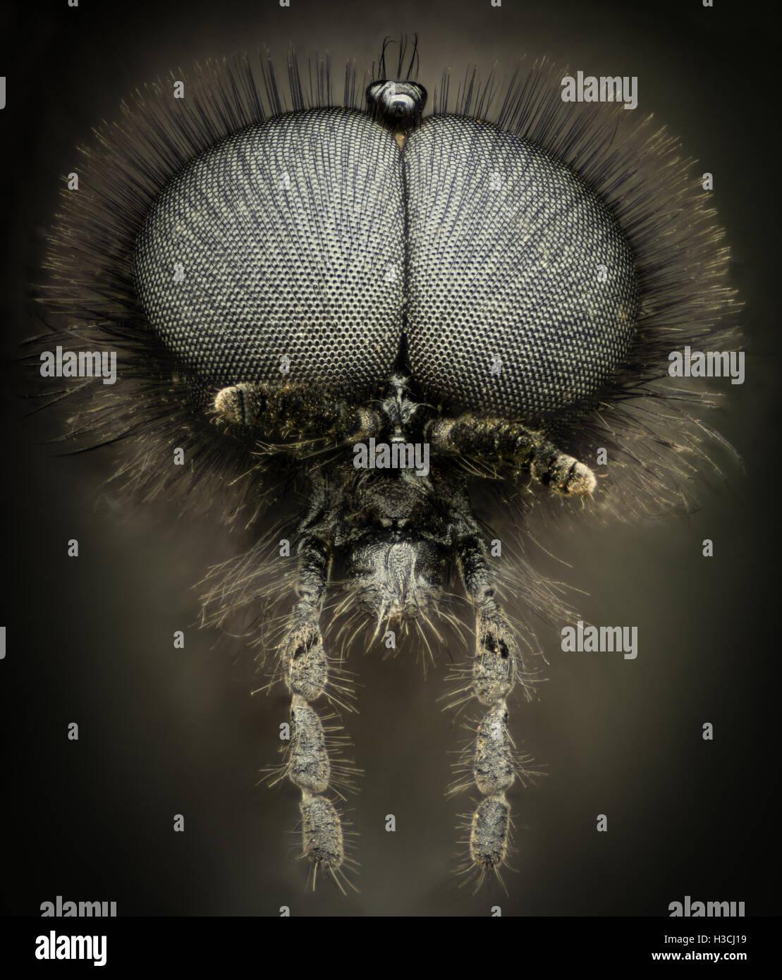Extreme magnification - Black wasp portrait Stock Photo