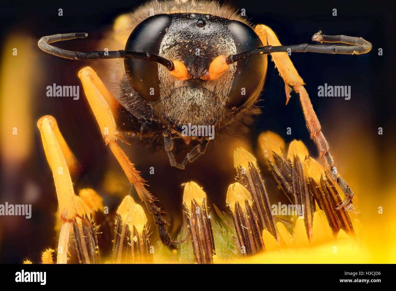 Extreme magnification - Wasp on a flower - Stock Image