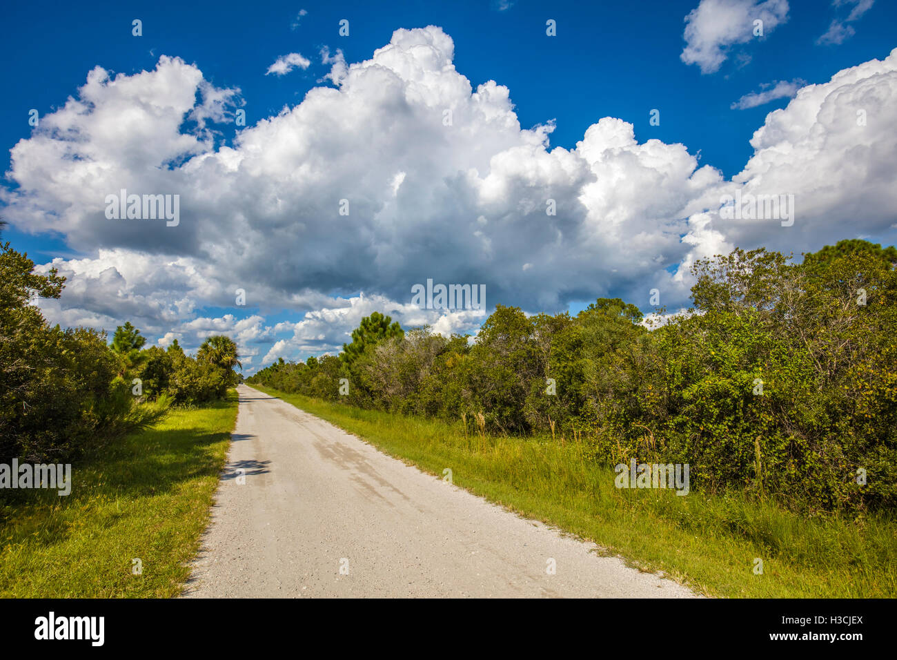 Road into Deer Prairie Creek Preserve in Venice Florida Stock Photo