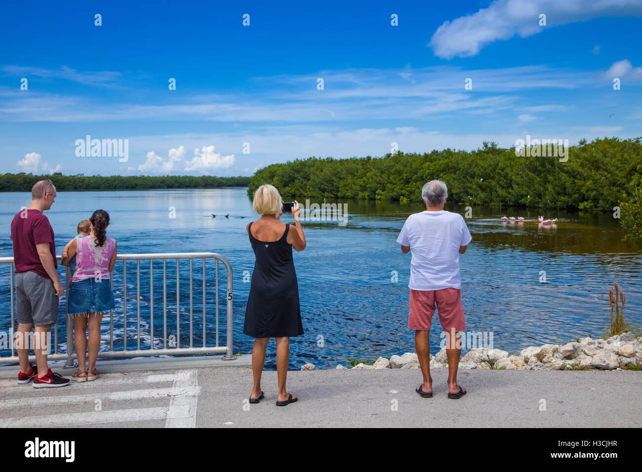 People veiwing birds in J N Ding Darling National Wildlife Refuge on Sanibel Island Florida - Stock Image