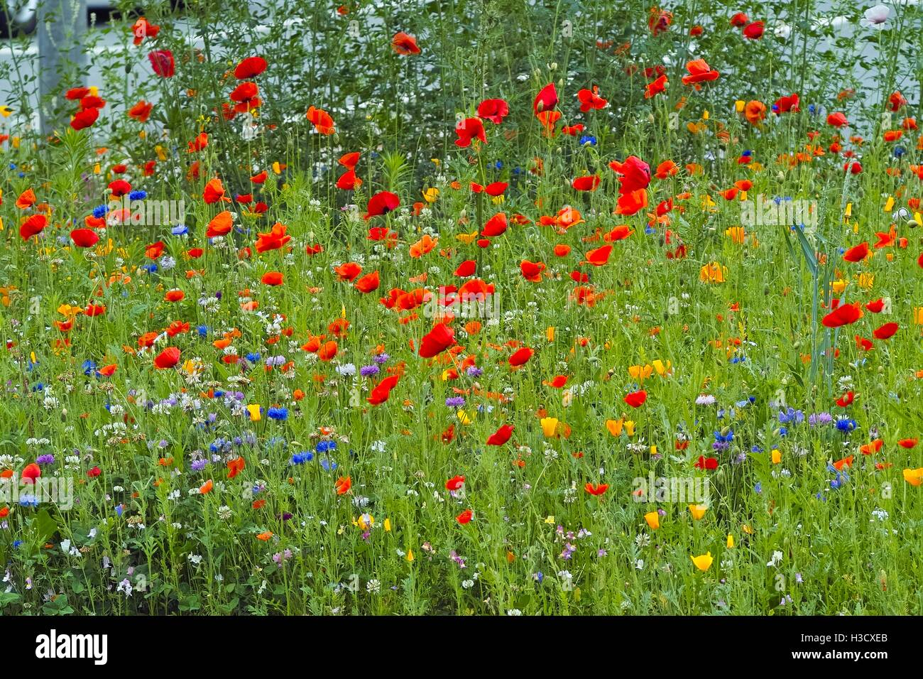 Beautiful Wildflowers In Red Orange Yellow And Blue Different