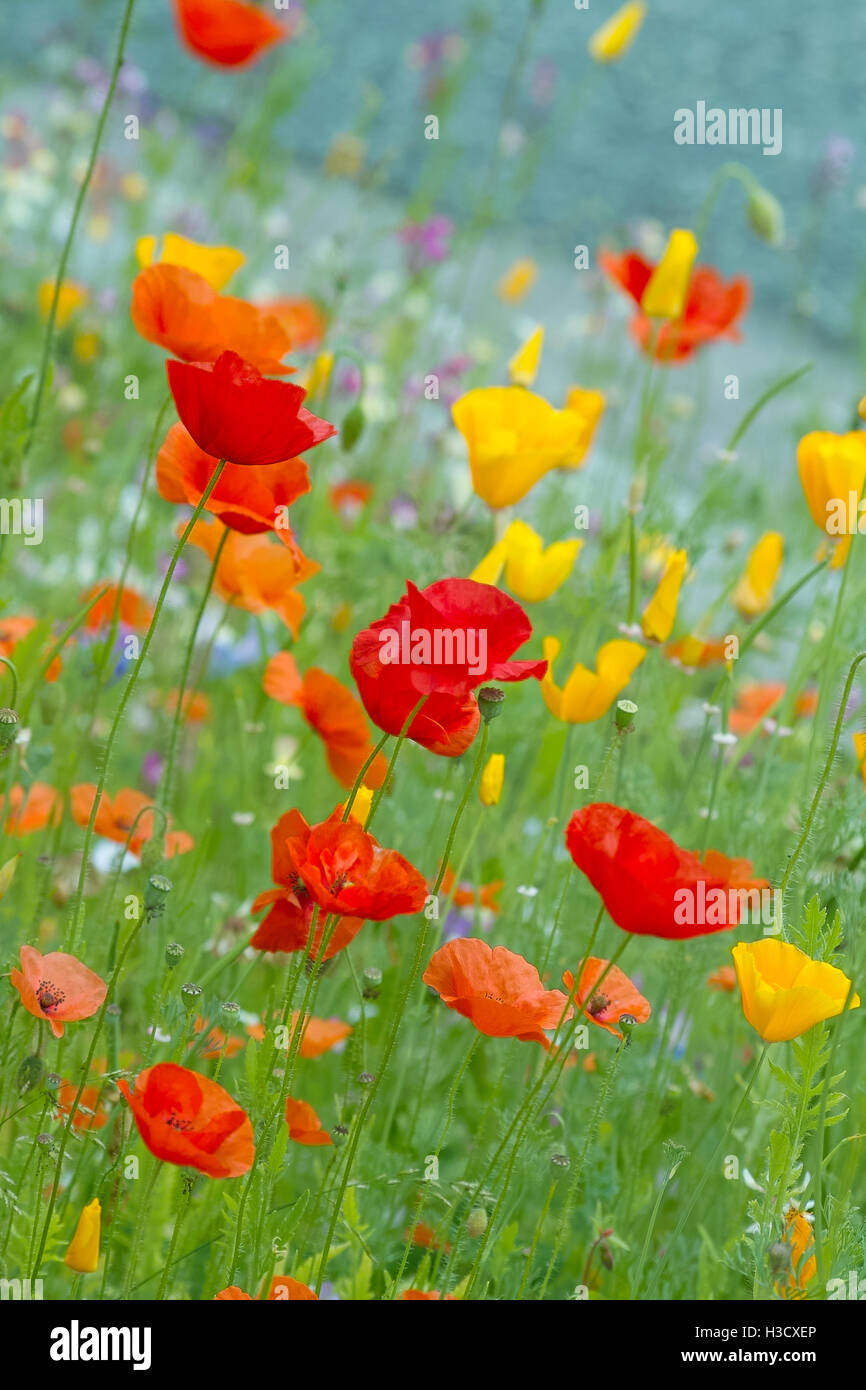 Poppy Like Flowers Gallery Flower Decoration Ideas