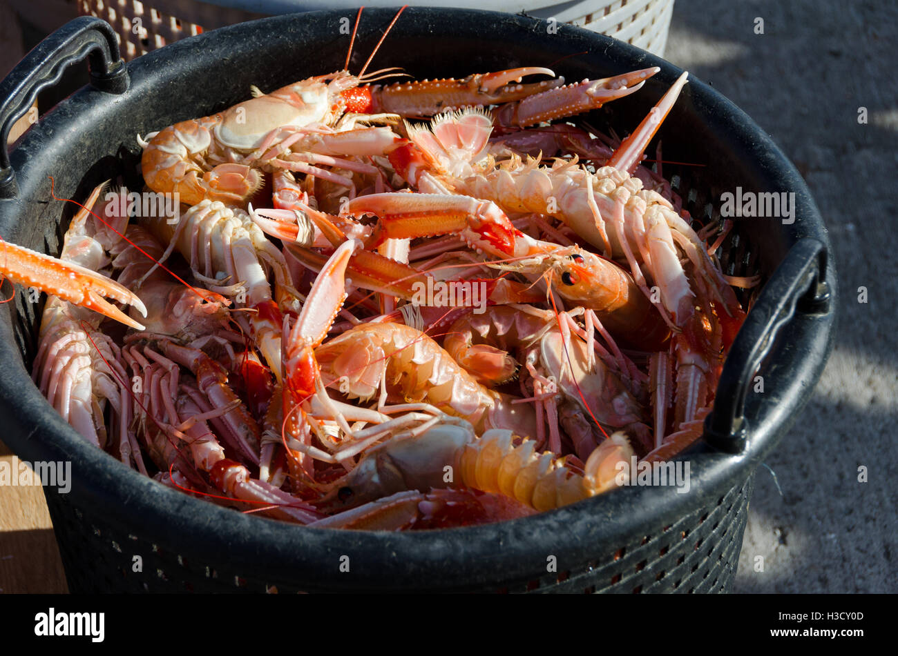 one basket full of norway lobster ready to eat - Stock Image