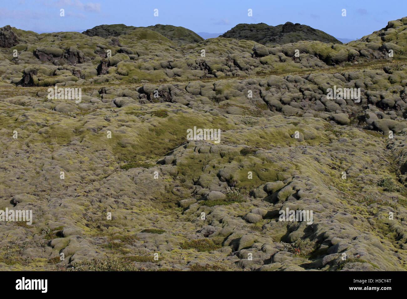 Eldhraun lava field Kirkjubæjarklaustur Iceland IS August 2016 - Stock Image