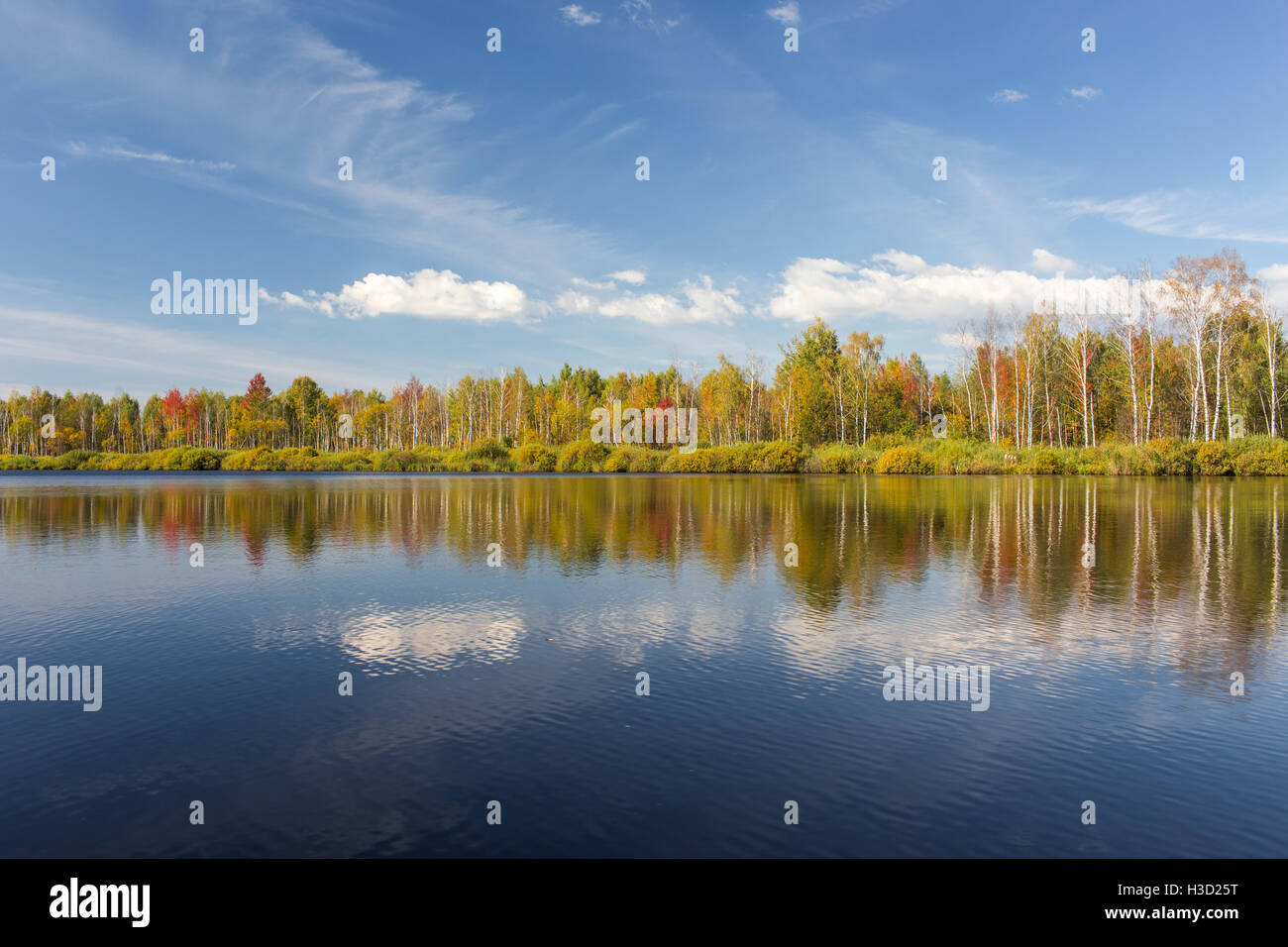 Wild nature in the autumn sunny day. - Stock Image