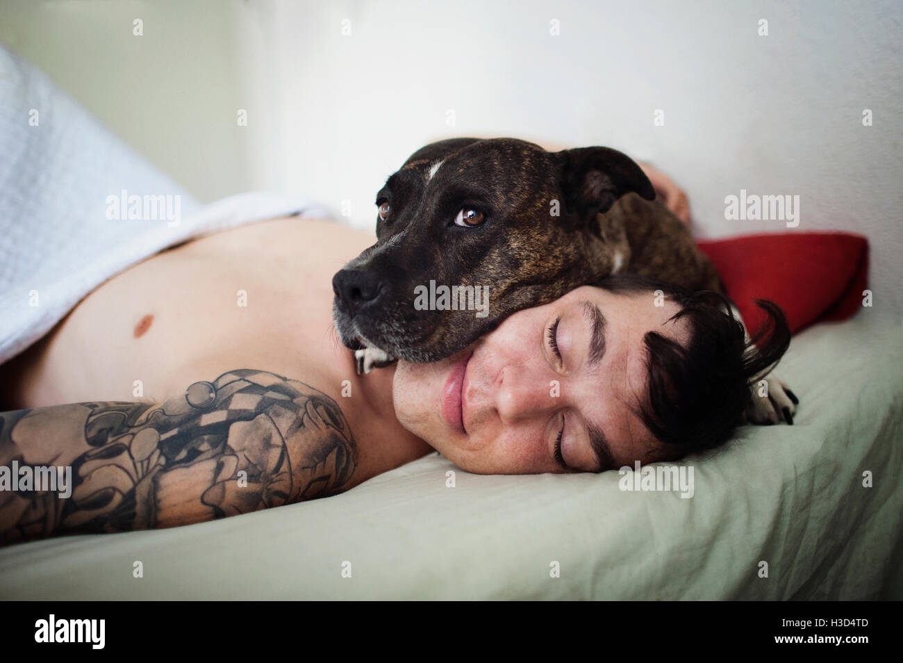 Portrait of dog lying on man's face while relaxing in bedroom - Stock Image