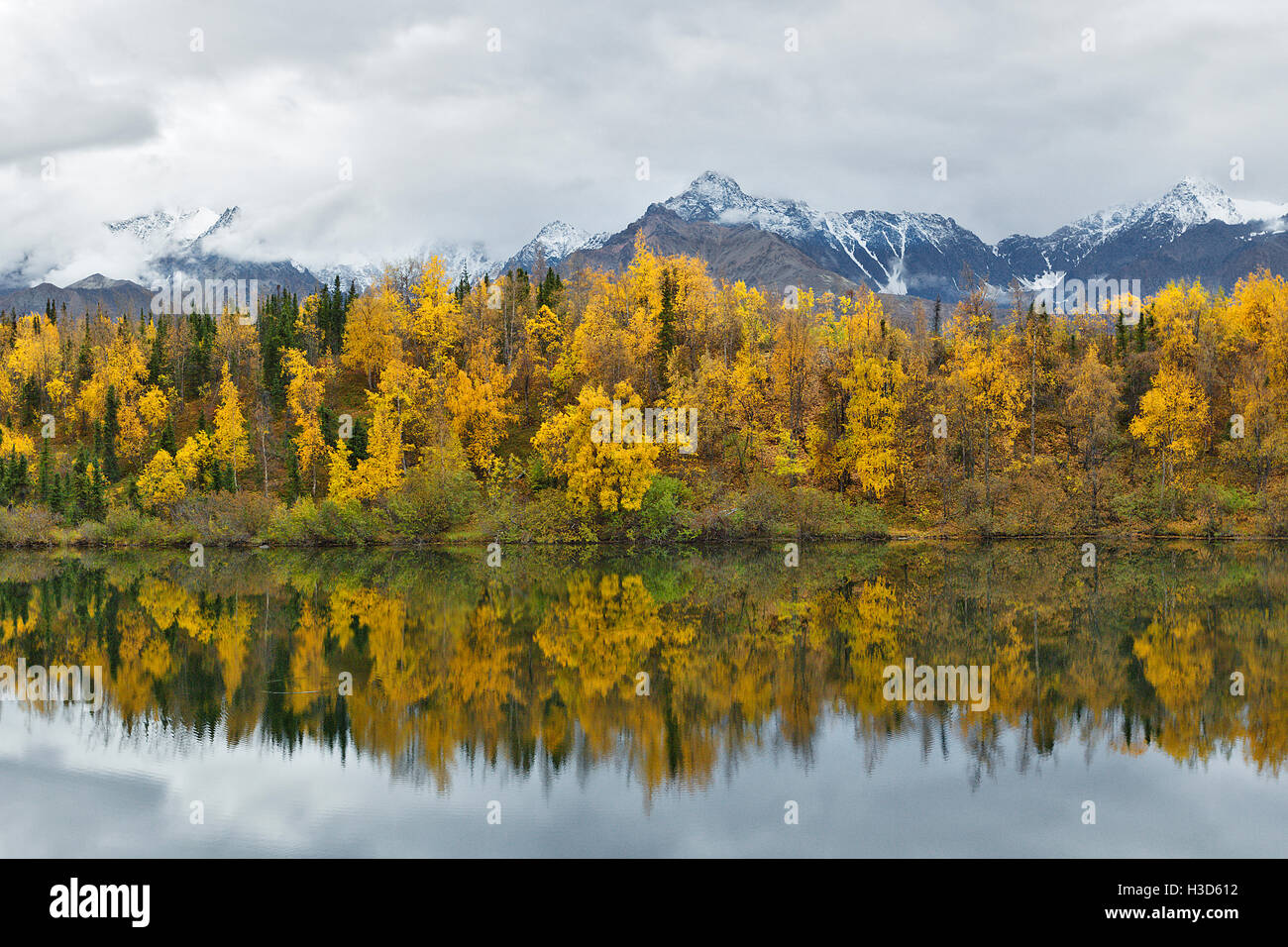 Fall colors of the boreal forest reflected in a still lake, Alaska, USA - Stock Image