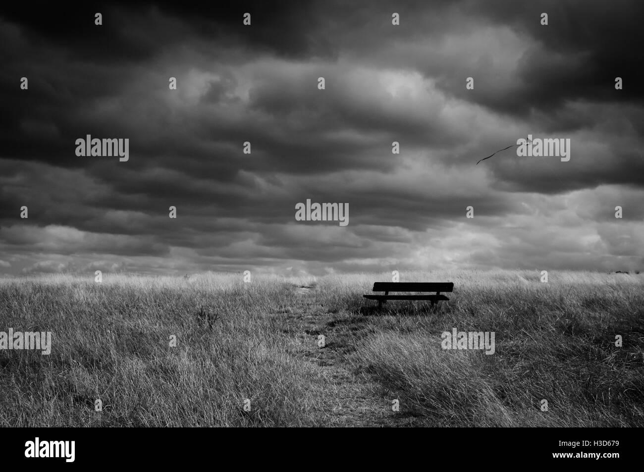 Hampstead Heath park in London. - Stock Image