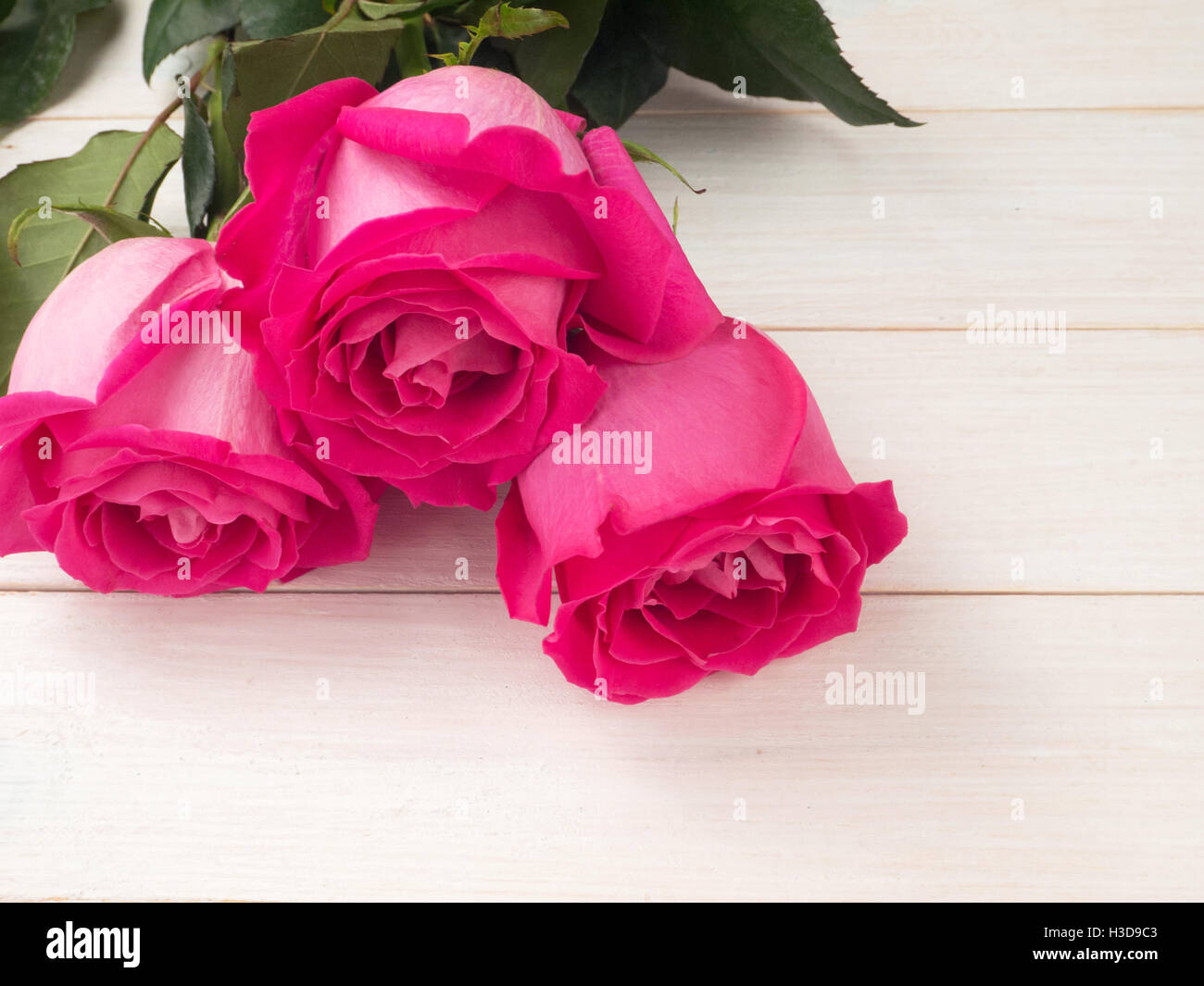 Three hybrid tea roses on the planks background - Stock Image