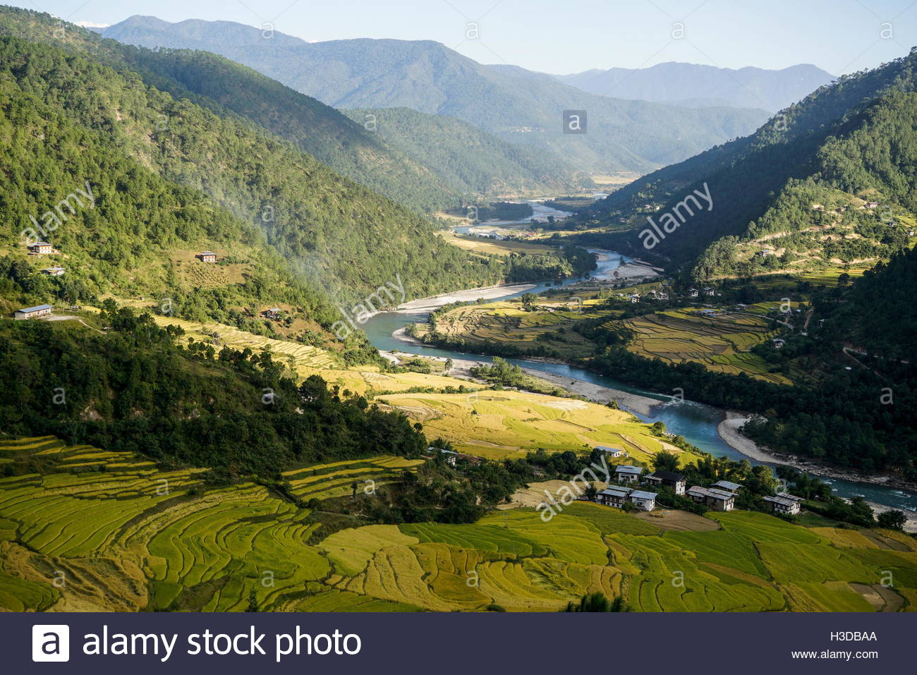 Terraced rice fields and Mo Chhu river in Punakha, Bhutan. - Stock Image