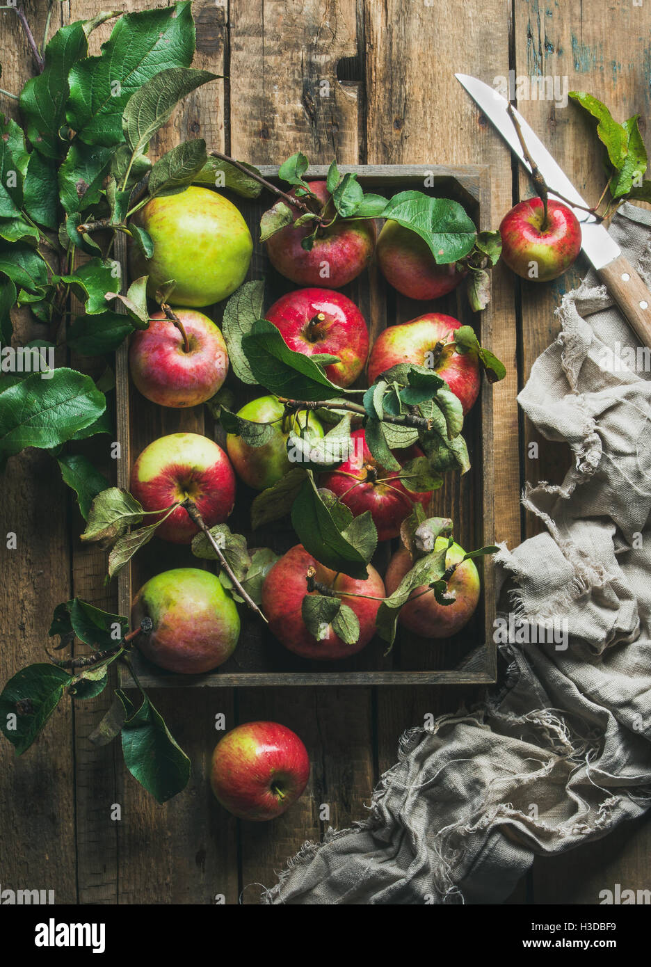 Seasonal garden harvest apples with green leaves in wooden tray - Stock Image
