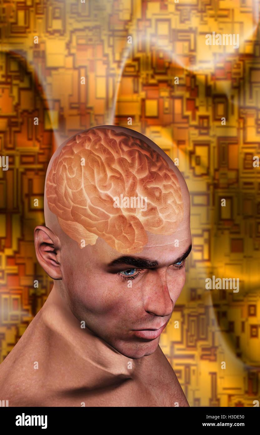 human brain - Stock Image