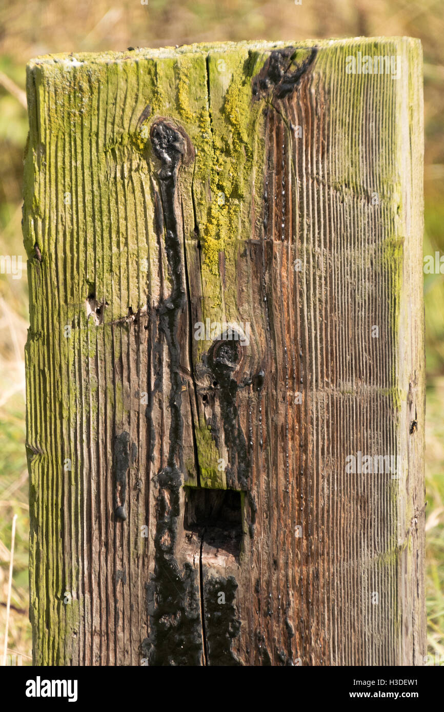 Shocked face in a wooden fence post - Stock Image