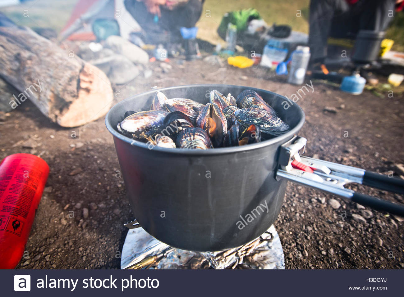 Fresh mussels steaming in a camp stove. - Stock Image