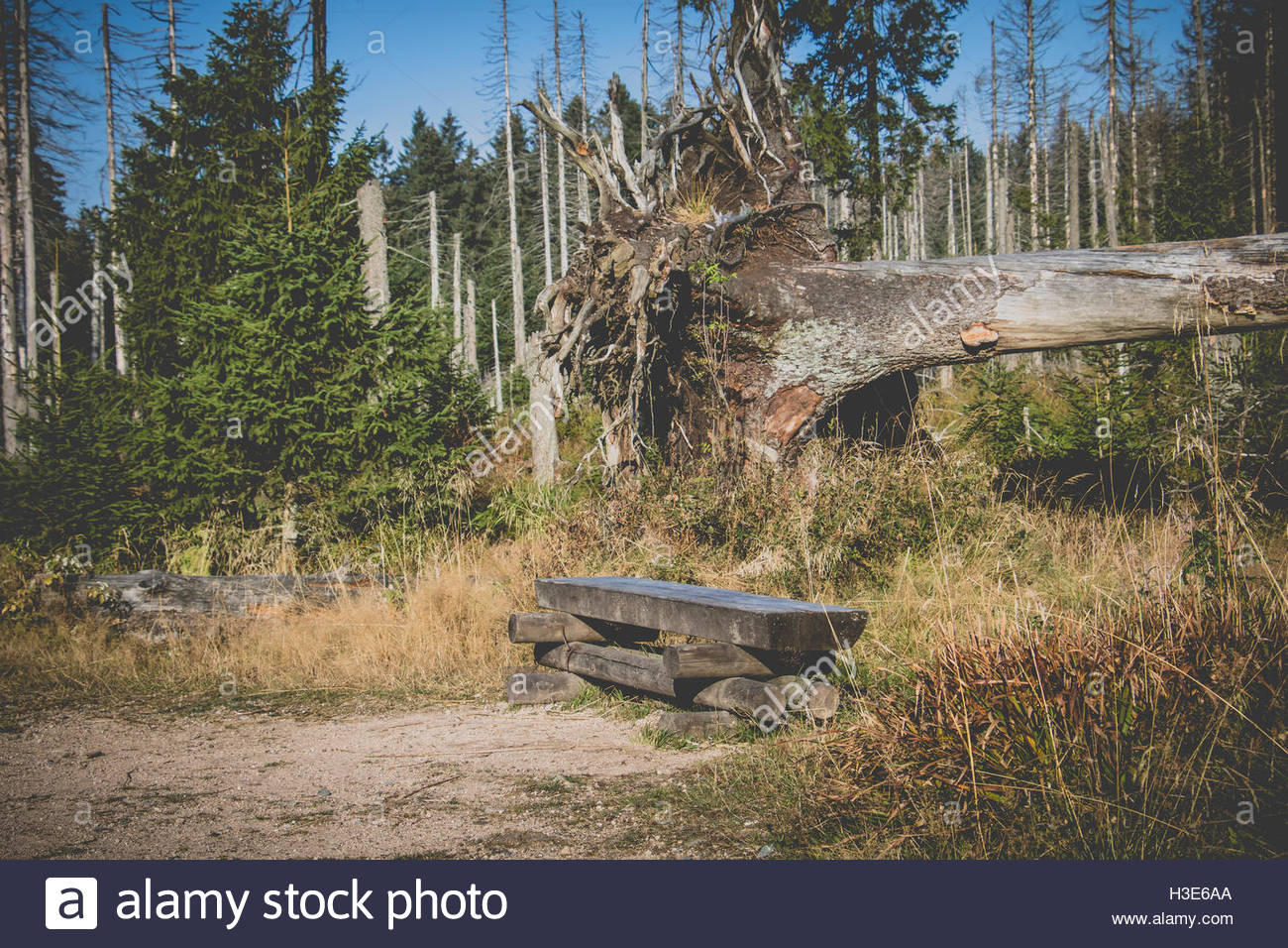 Forest in Germany, National Park Harz, wooden rustic bench at hiking trail  harz germany empty bench forest bench - Stock Image