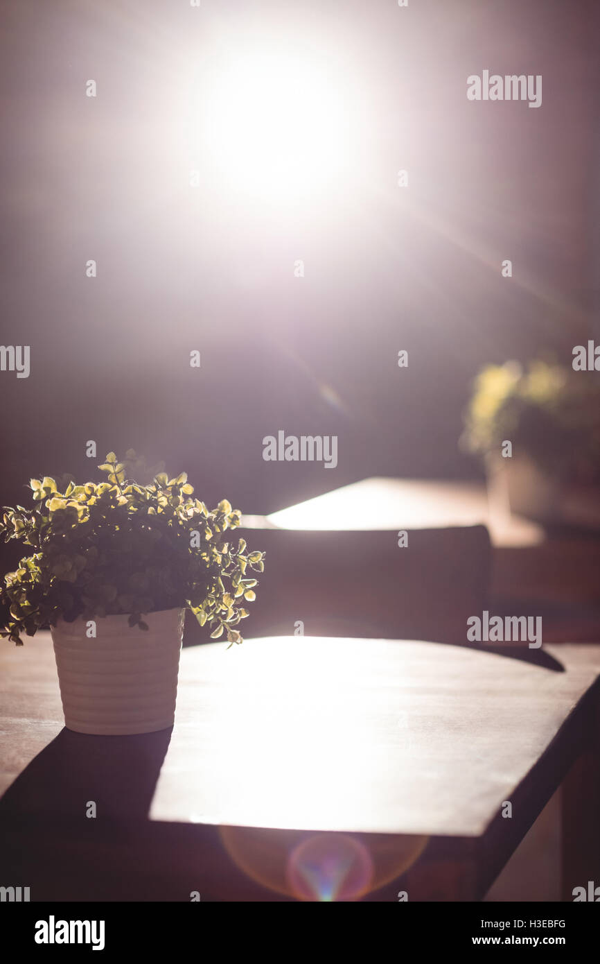 Potted plant on table at cafe - Stock Image