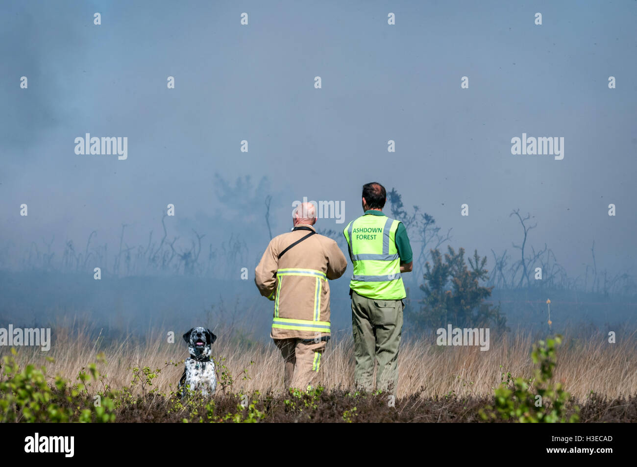 Ashdown Forest on fire, spreading fast and the Fire Brigade are making plans for local evacuation. - Stock Image