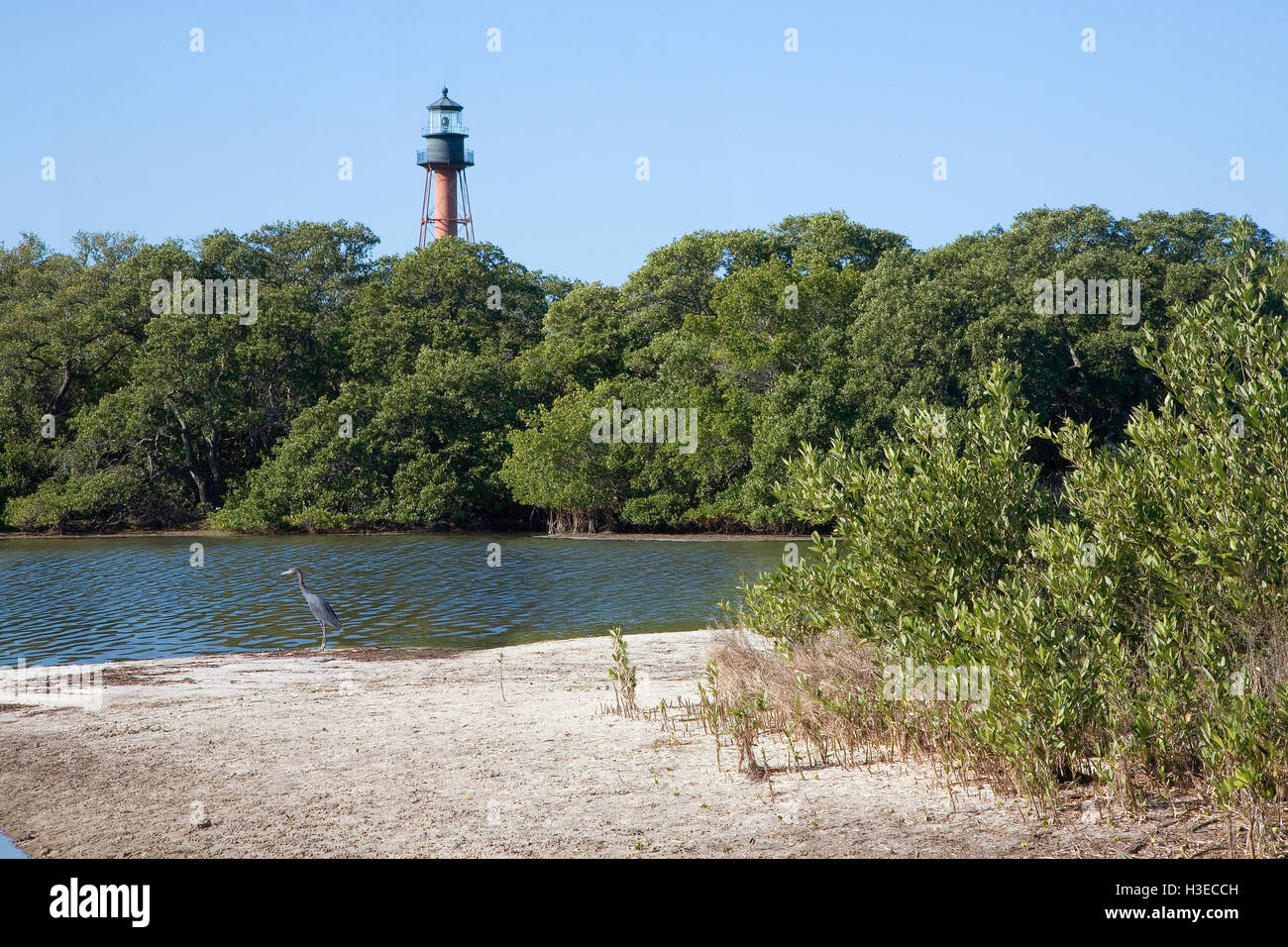 A view of Anclote Key from an east approach. It rises above verdant mangroves & a little blue heron stands quietly - Stock Image
