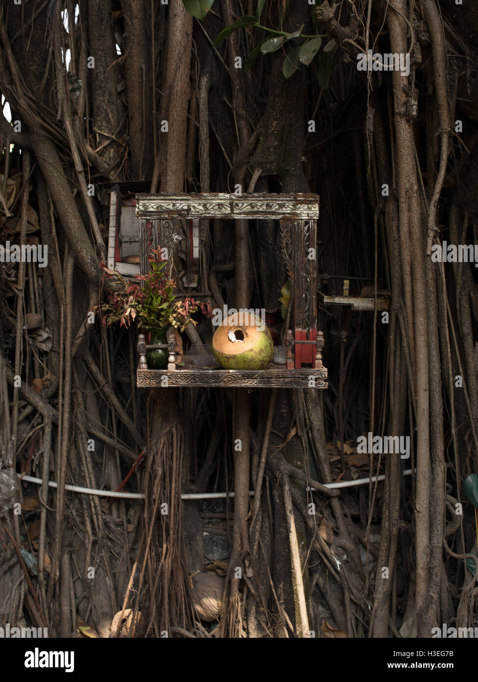 An offering of a coconut in a Buddhist shrine. Symbolic offerings are meant to be contemplative. - Stock Image
