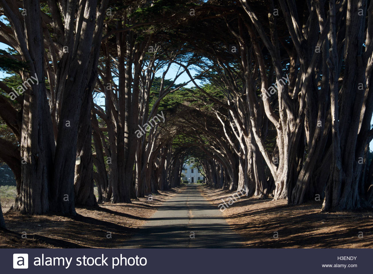 A canopy of cedar trees fade into the distance to the historic RCA building in Point Reyes National Seashore, California. - Stock Image