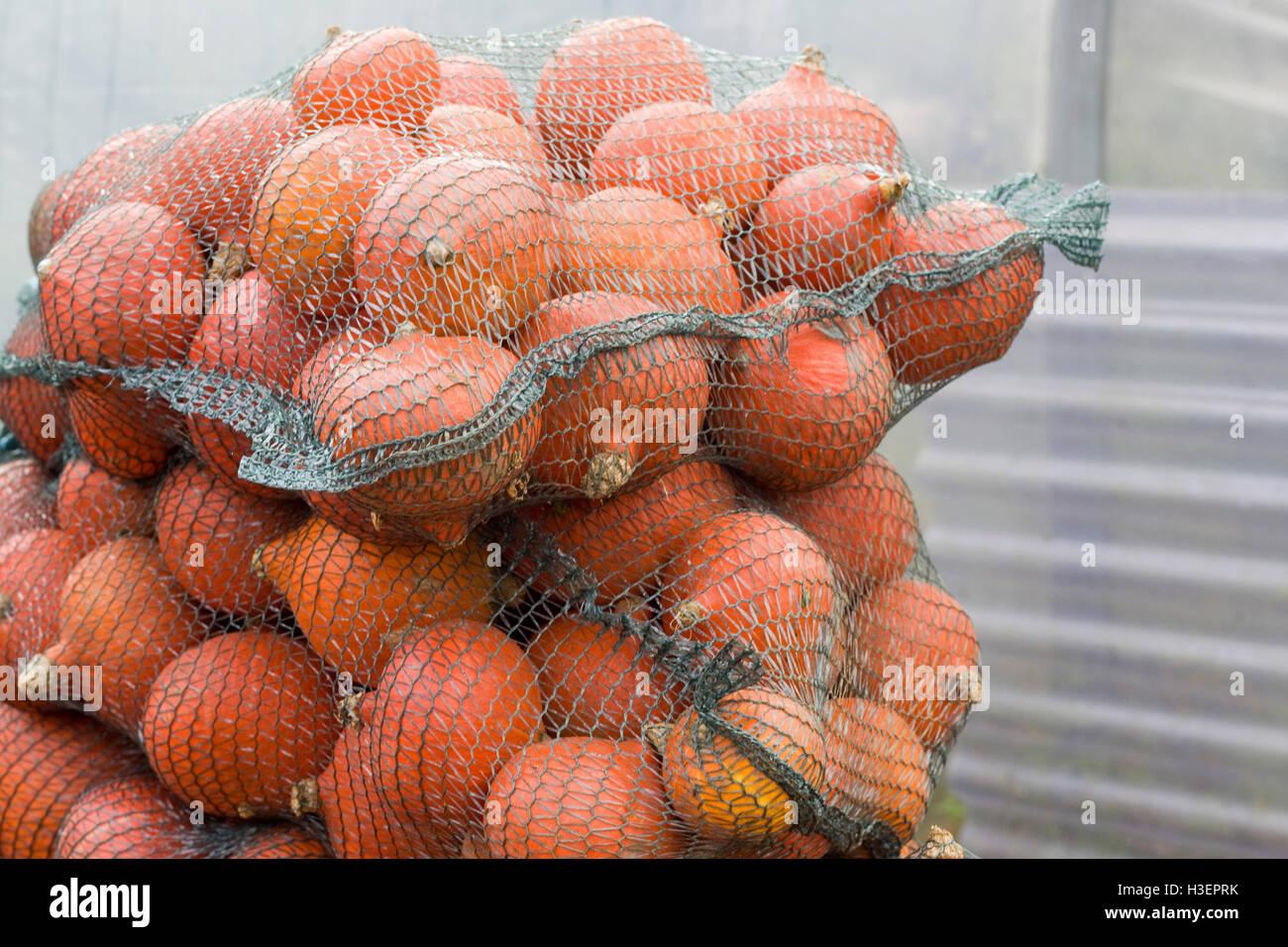 Cucurbita, Baged Red kuri pumpkins Stock Photo