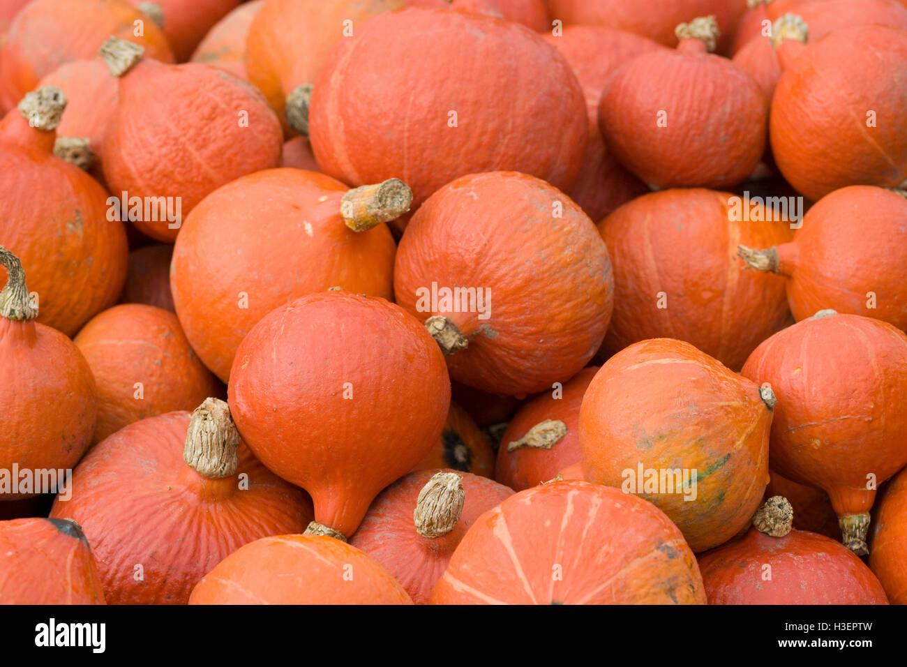 Cucurbita, Red kuri Pumpkin Stock Photo