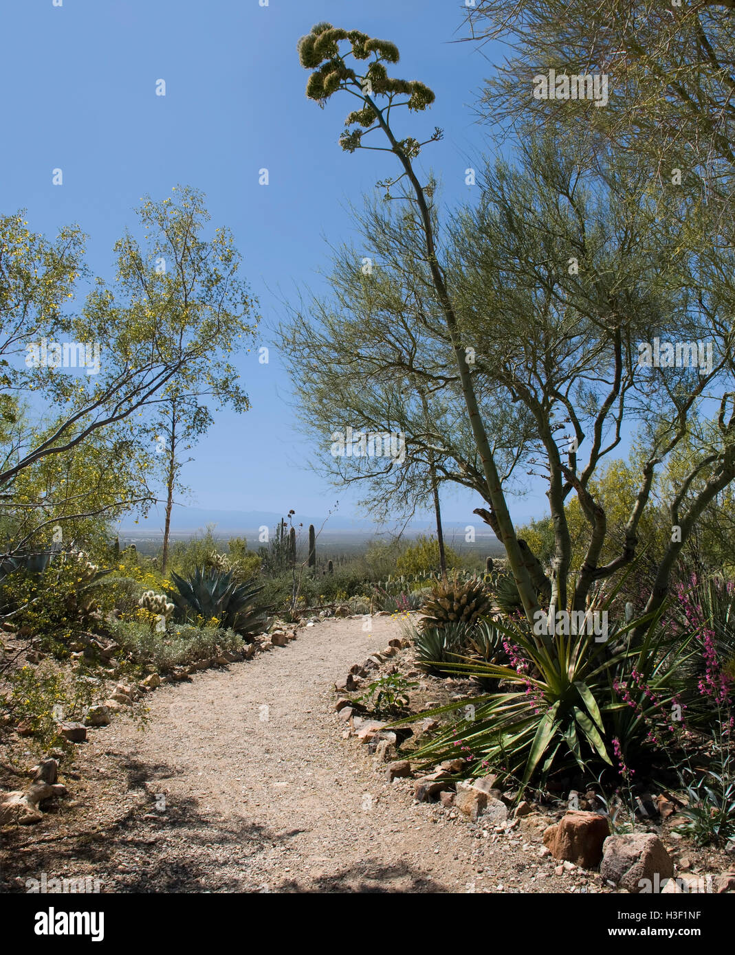 Desert Path of rocks Leading to Blue Sky - Stock Image