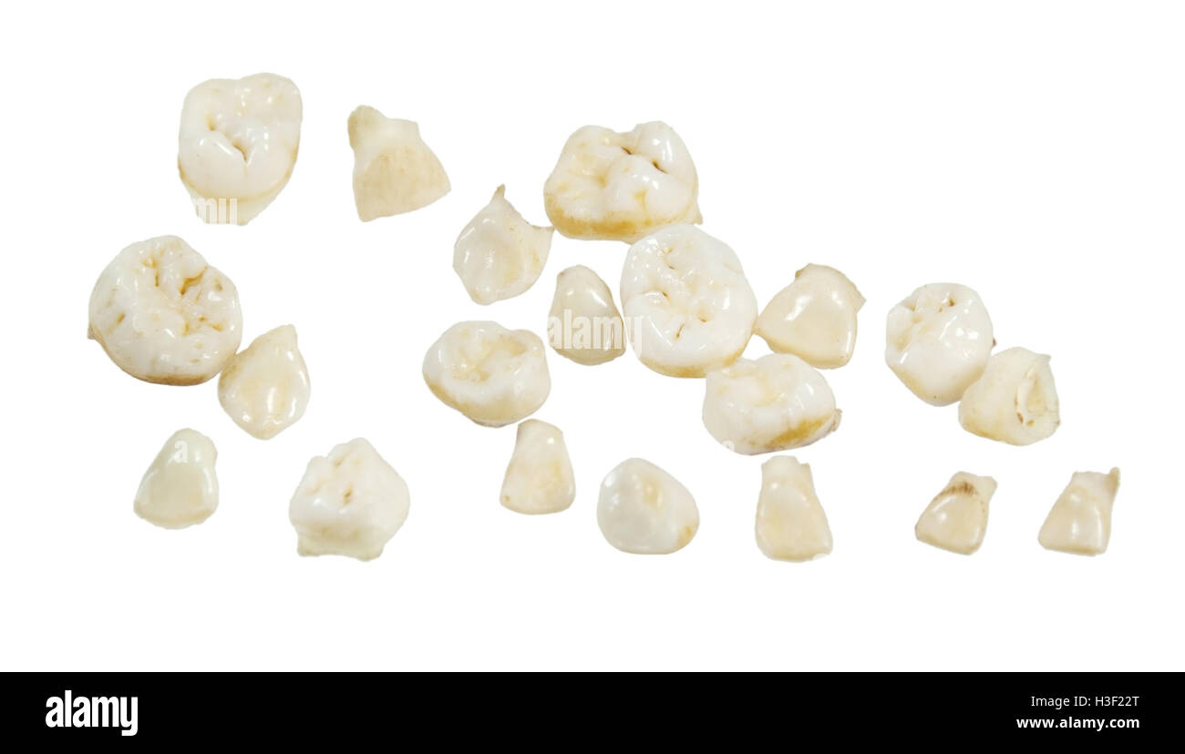 A set of baby teeth kept as a childhood keepsake - path included - Stock Image