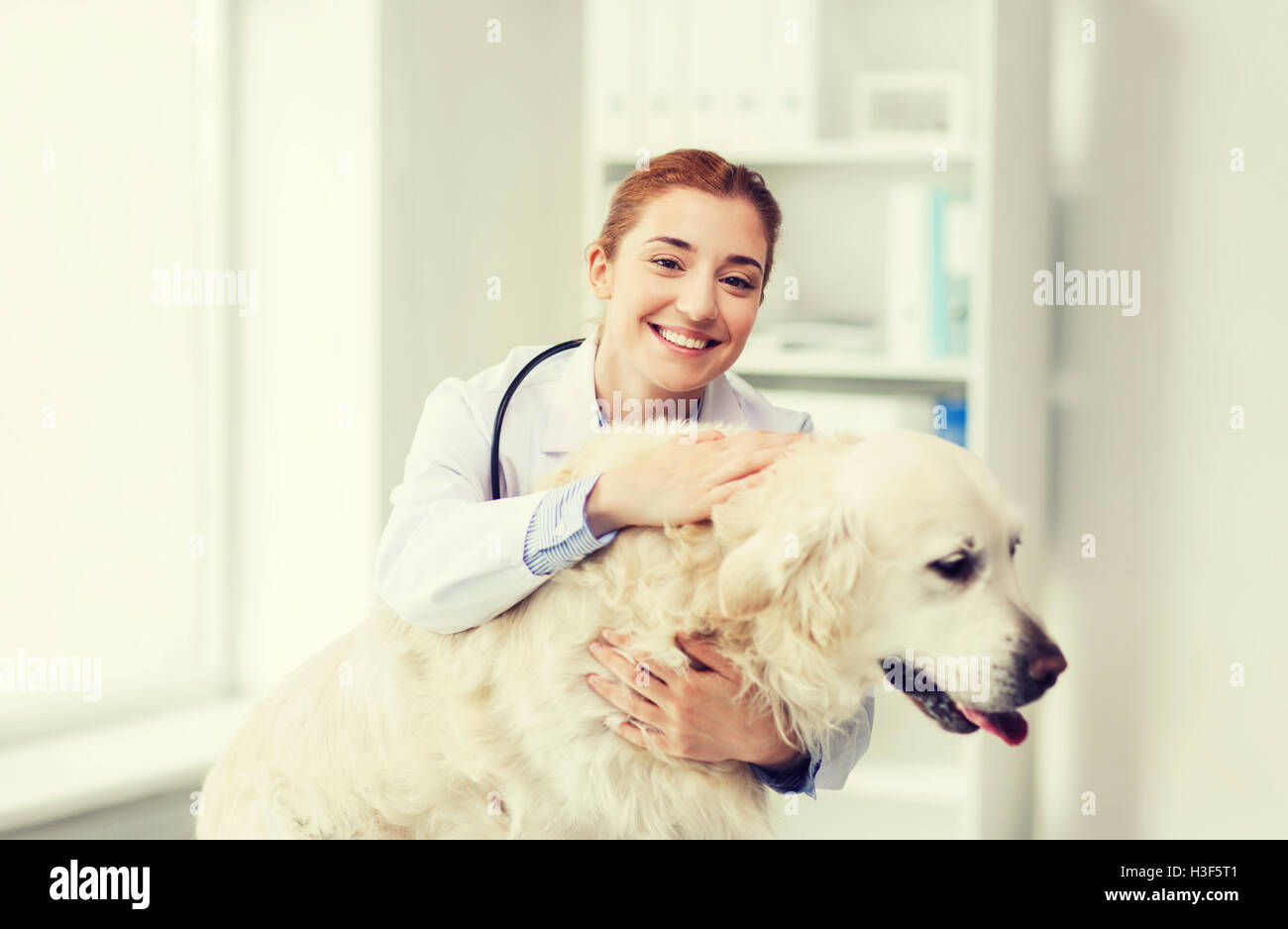 happy doctor with retriever dog at vet clinic - Stock Image