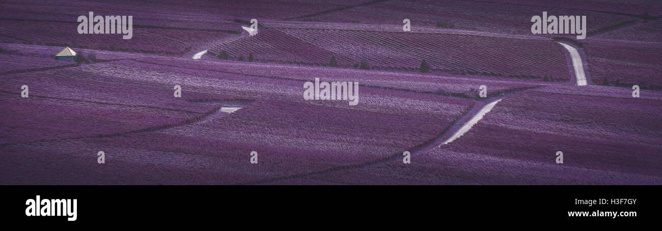 Vineyard flair - Stock Image