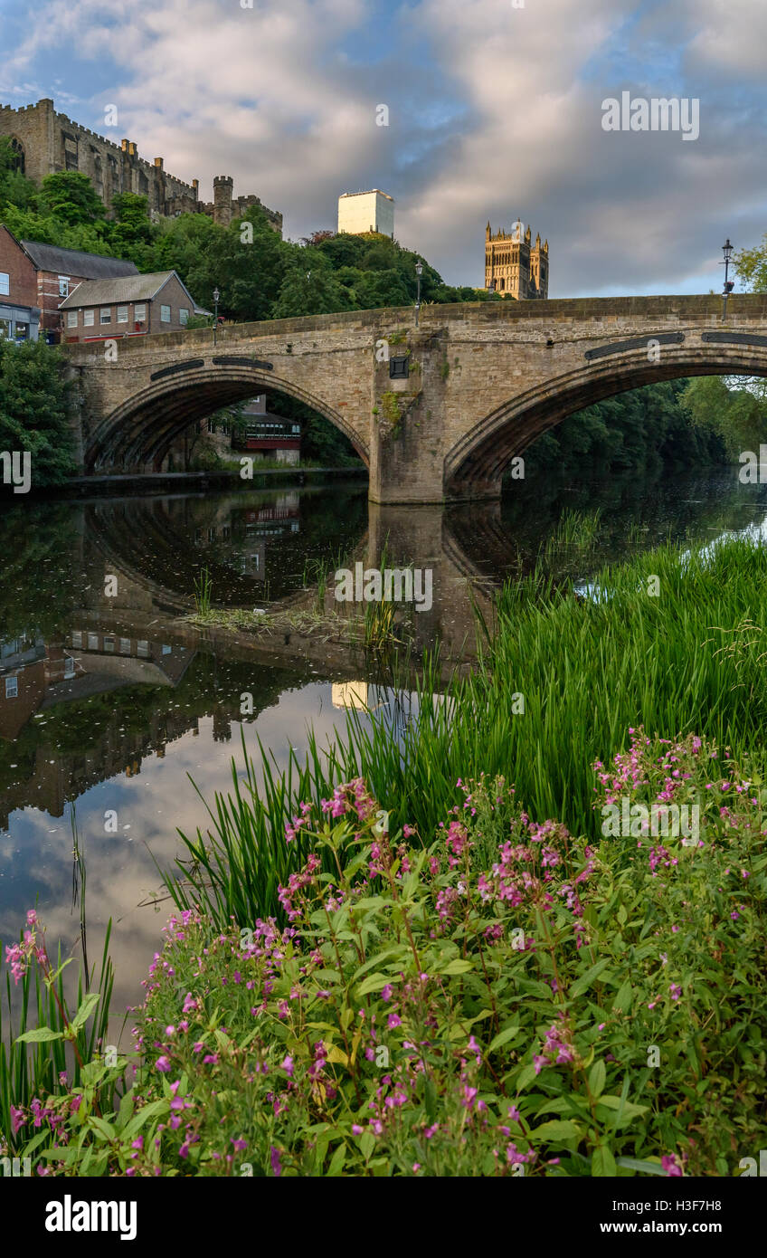 Wild flower on the bank of River Weir flowing through the Durham City, England. - Stock Image