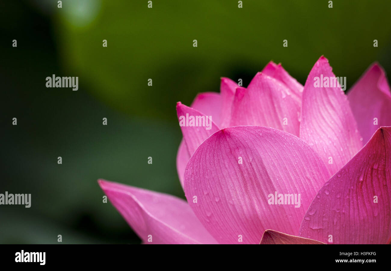 Flowers Near Me Flower Delivery Stock Photo 122661156 Alamy