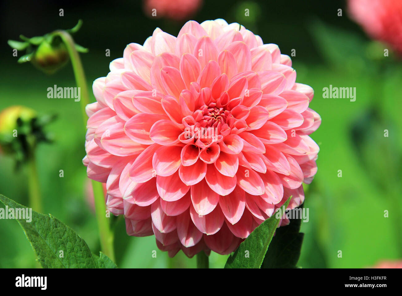 Flowers Near Me Flower Delivery Stock Photo 122661163