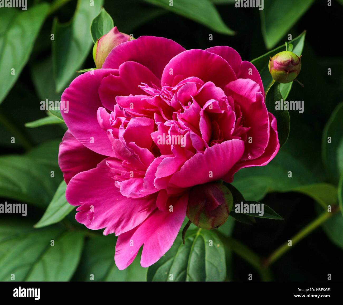 Flowers Near Me Flower Delivery Stock Photo 122661182