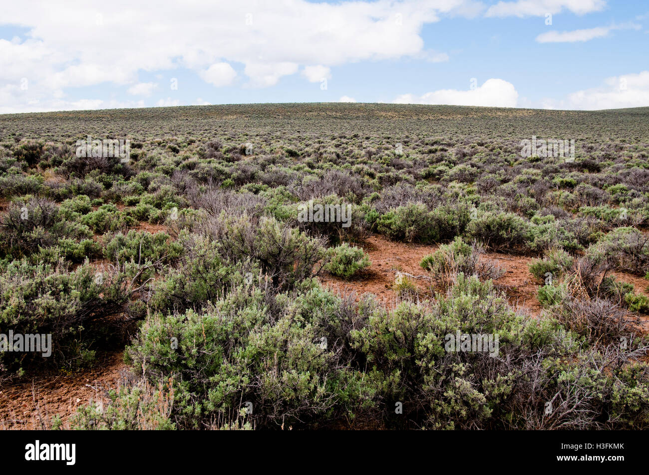 Big sagebrush habitat (aka the sagebrush sea) in eastern Oregon - Stock Image