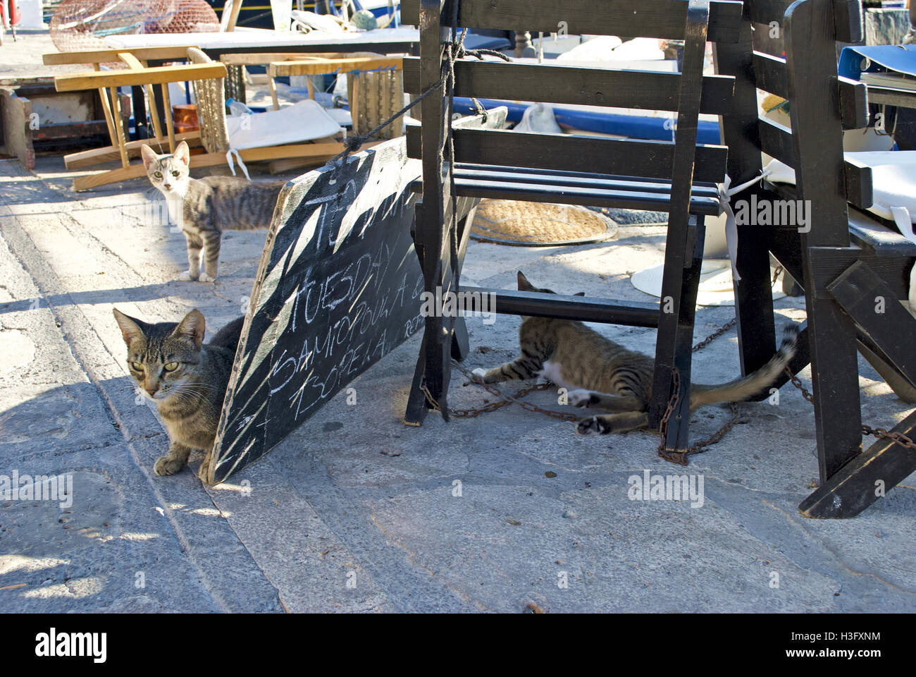 Three stray tabby cats play amongst wooden chairs at the pier in Samos. - Stock Image