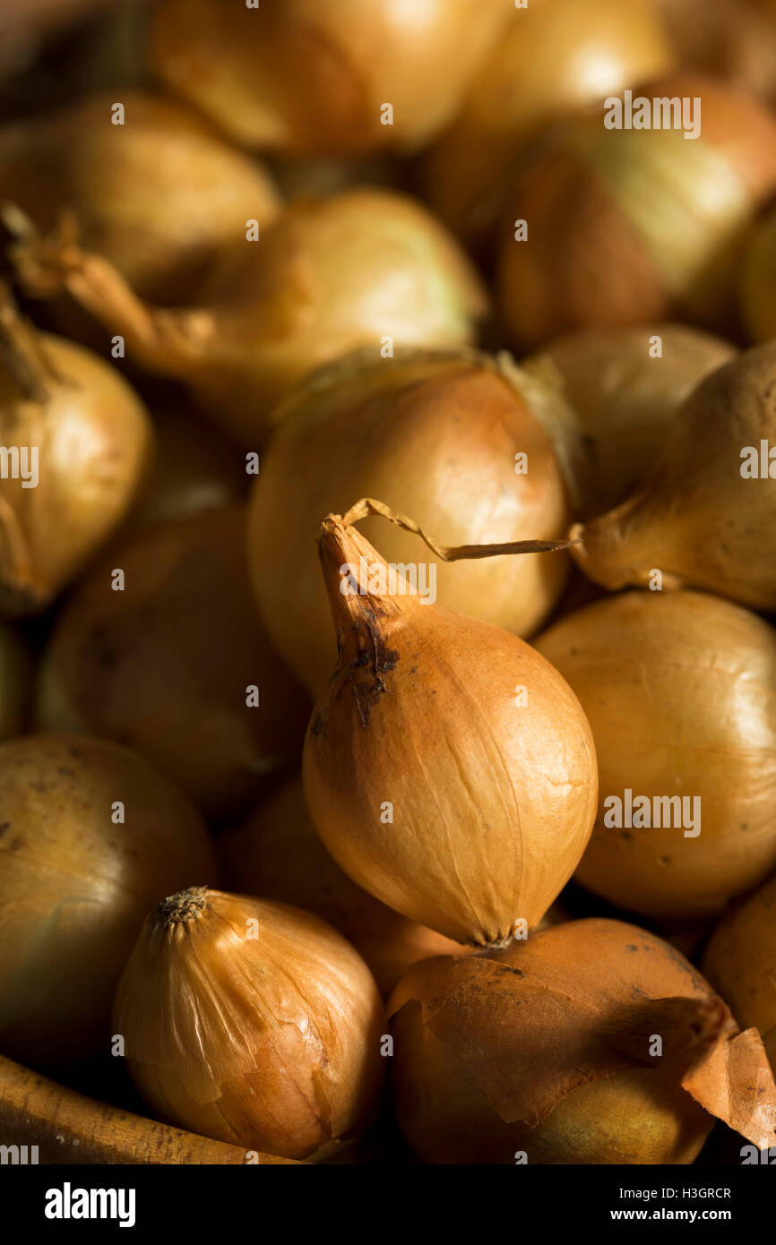 Organic Raw Yellow Pearl Onions Ready for Cooking - Stock Image