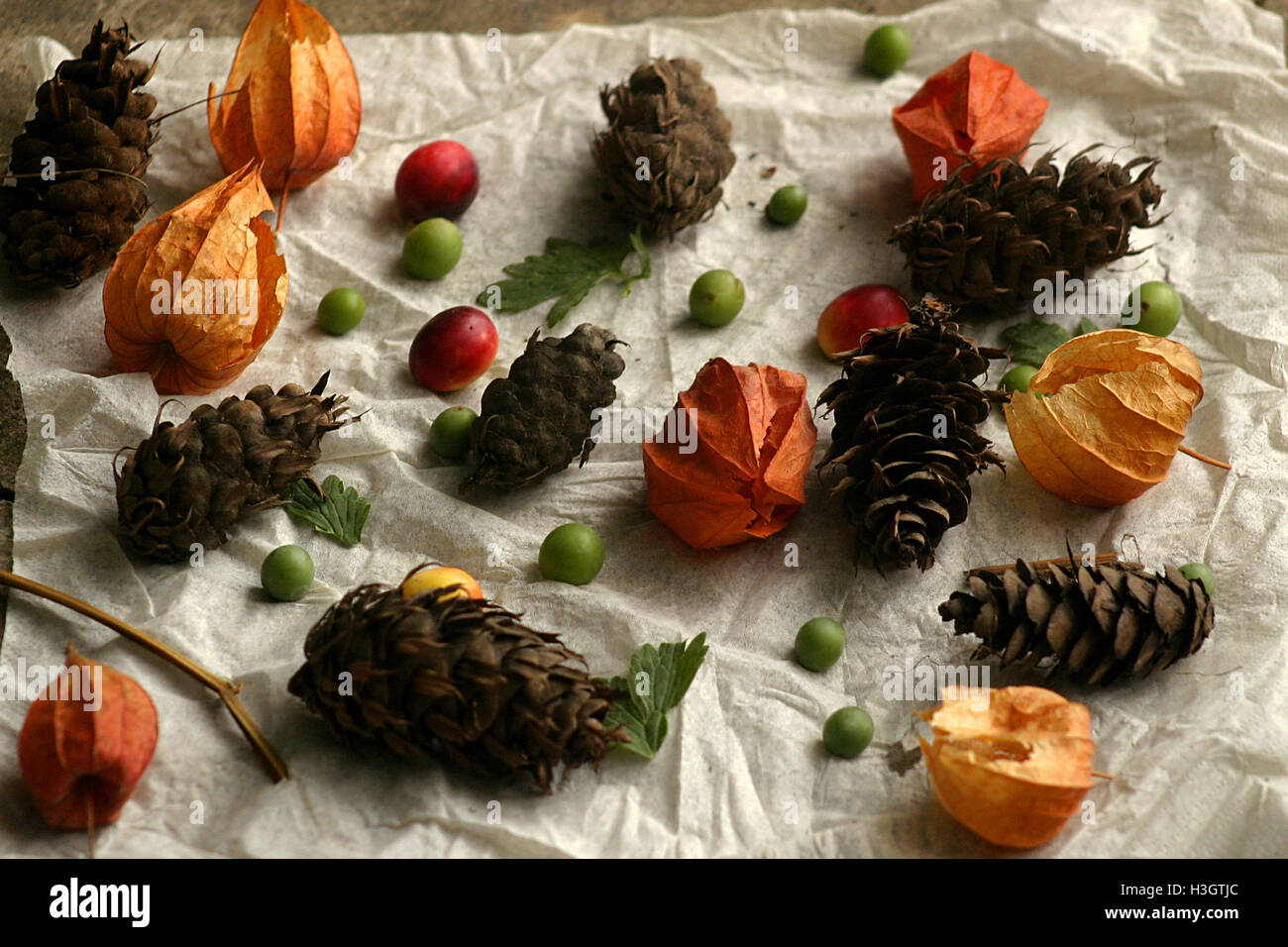 Fall harvest from woods, a child's game Stock Photo