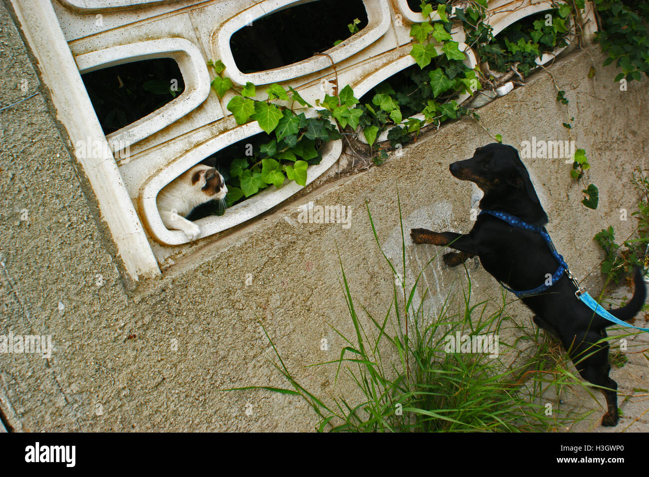 Cat interact whit dog. - Stock Image