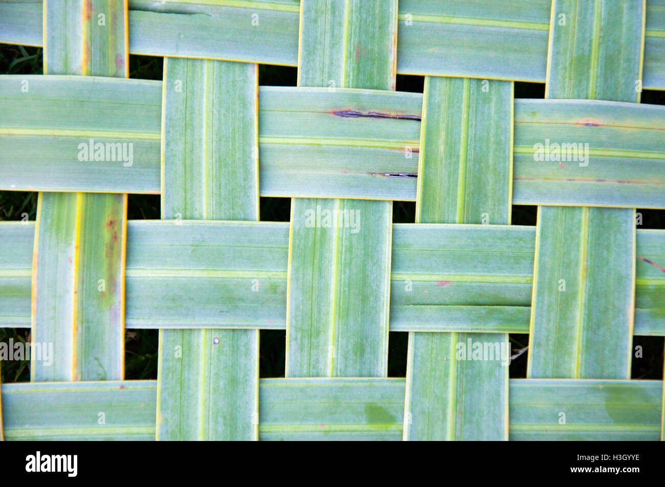 Green tropical palm tree branch leaves woven, full frame nature background. - Stock Image