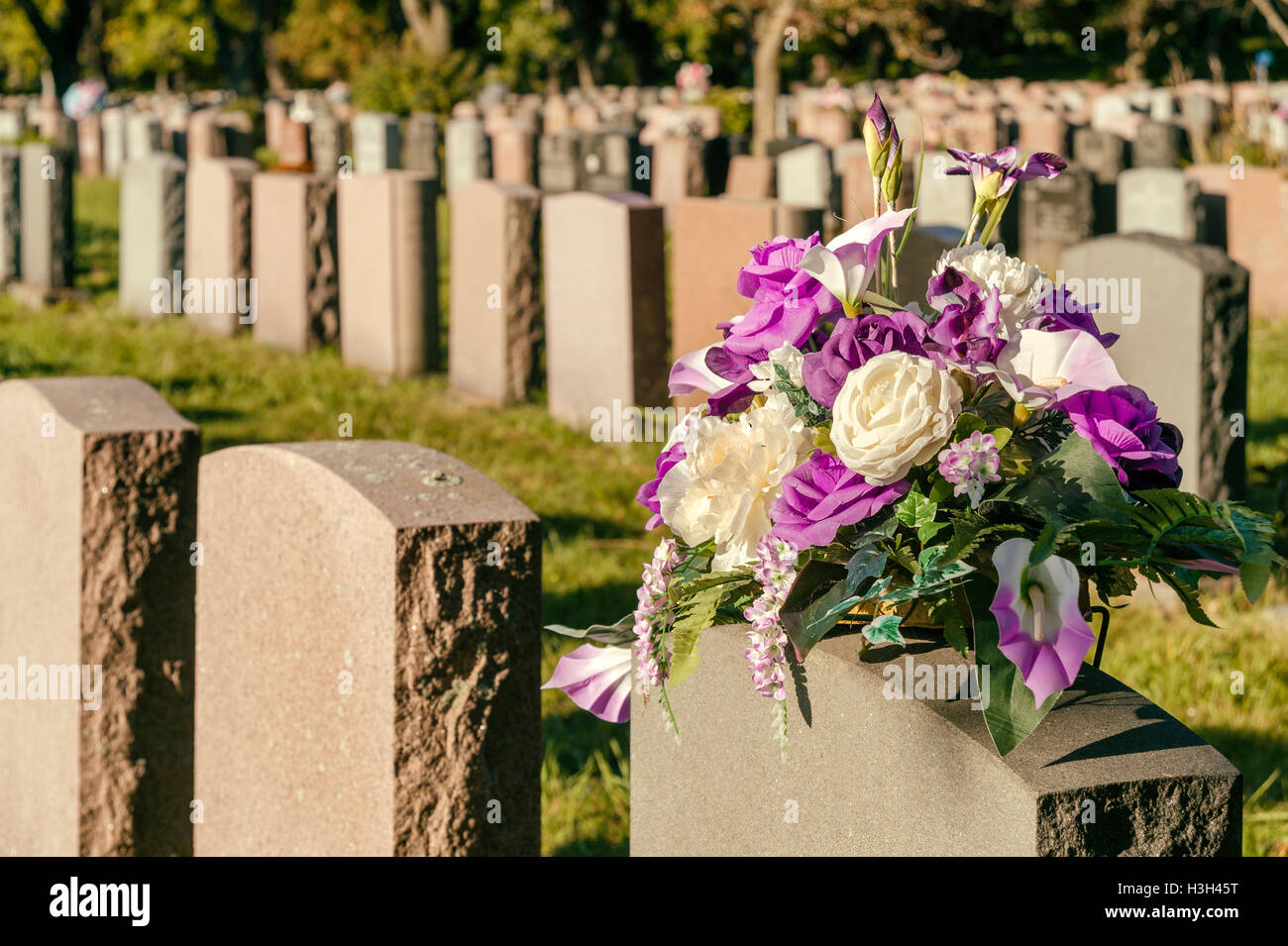 What are the flowers in the cemetery 62