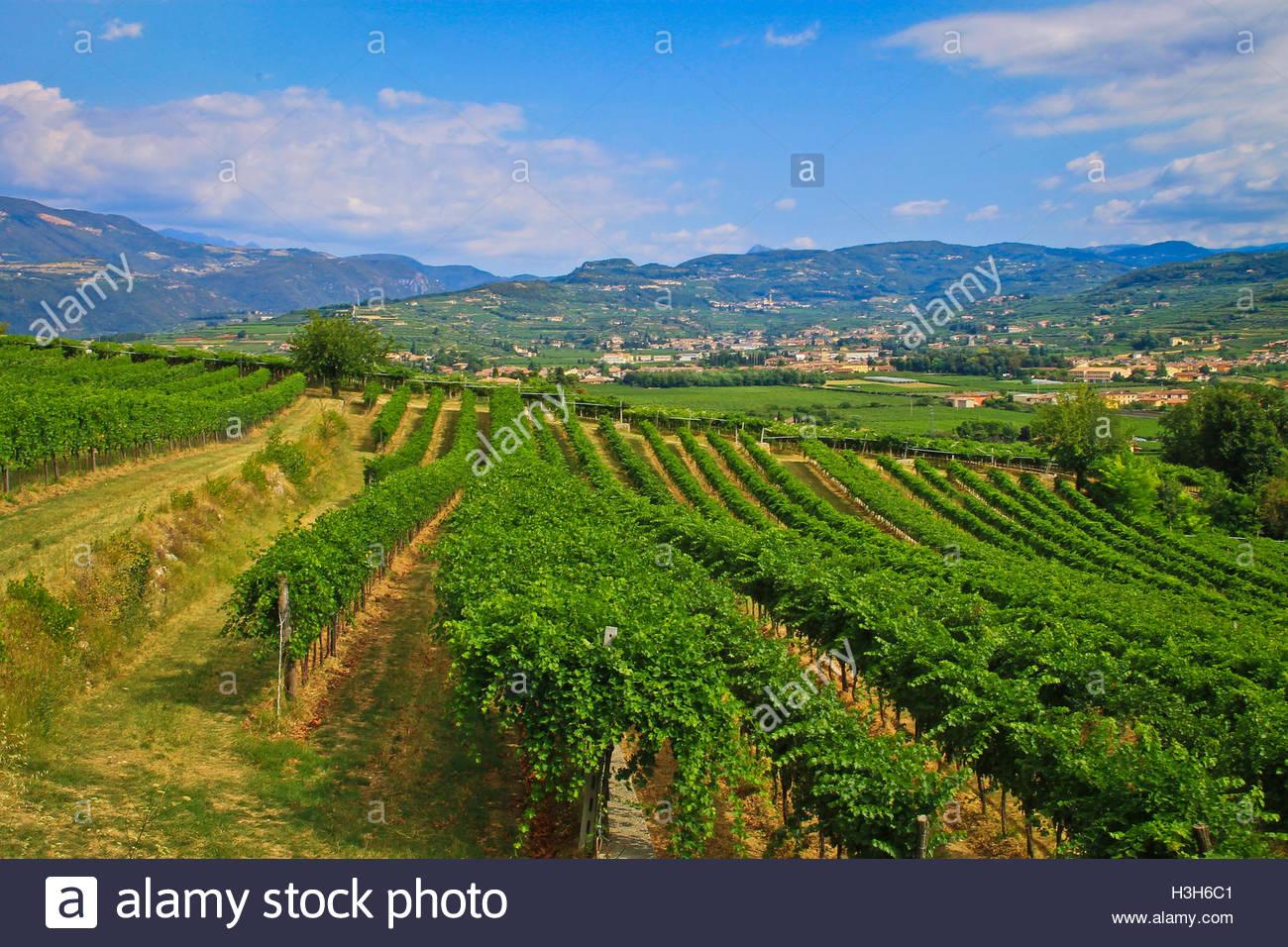 Biodynamic Wine Stock Photos Amp Biodynamic Wine Stock