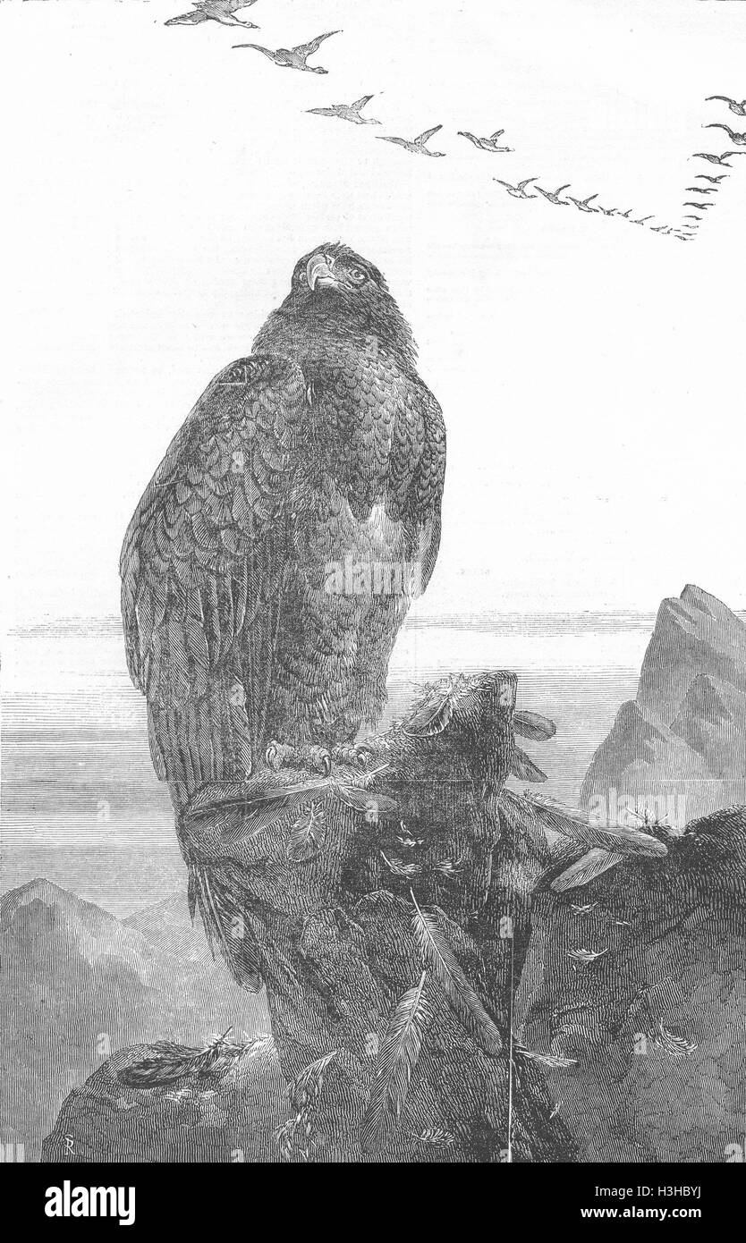 ROYALTY The Eagle's Throne 1851. Illustrated London News - Stock Image