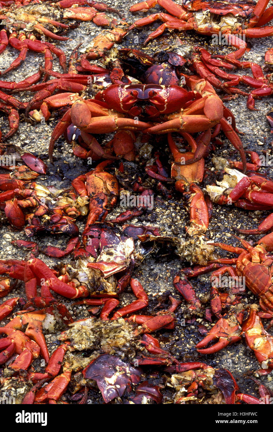 Cannibalism Stock Photos & Cannibalism Stock Images - Page 2 - Alamy