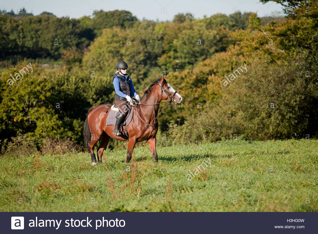 Young woman riding in open field UK - Stock Image