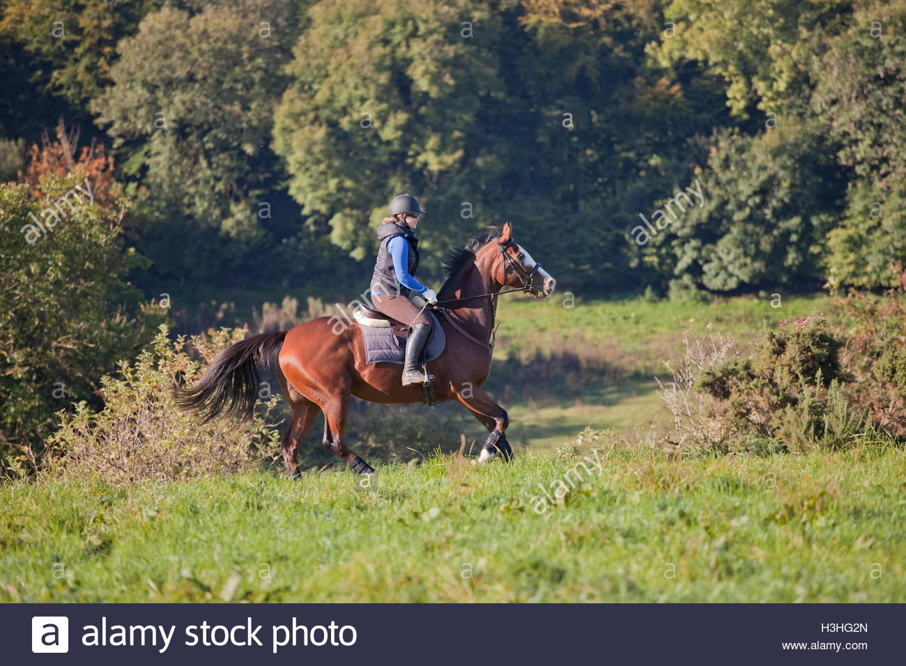 Young woman cantering a horse in an open field UK - Stock Image