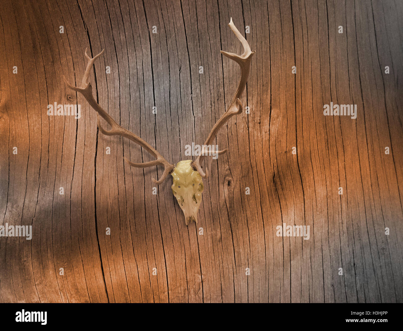 Lacquered deer skull on abstract tree bark lines in sepia tones. Stock Photo