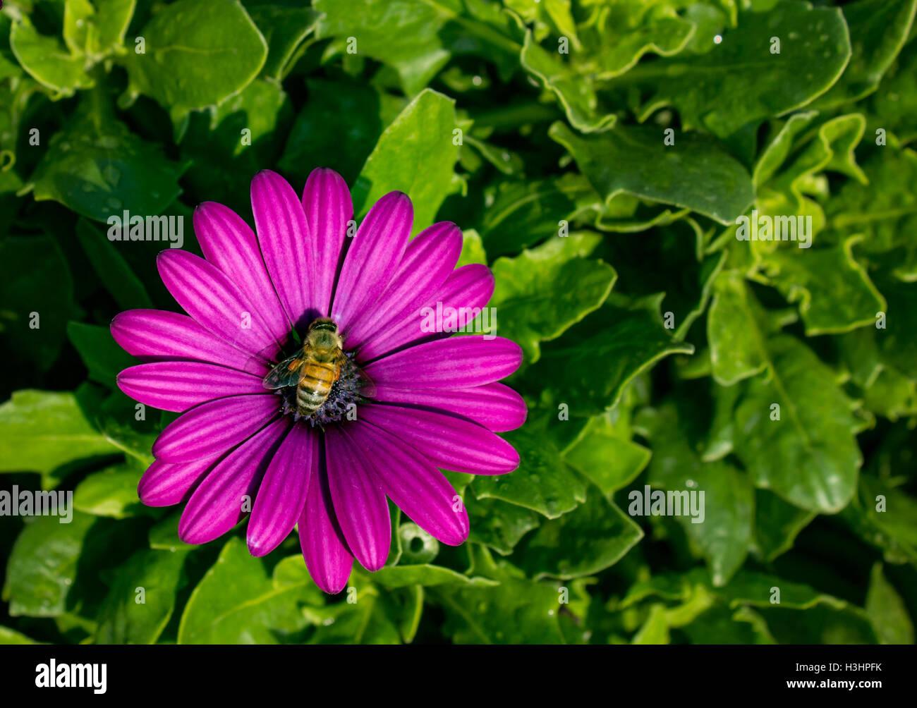 Photo Of Beautiful Purple Daisy Flower Stock Photos Photo Of