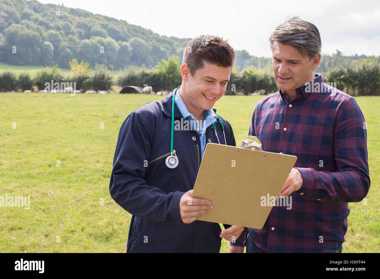 Farmer And Vet Having Discussion In Field Of Sheep - Stock Image