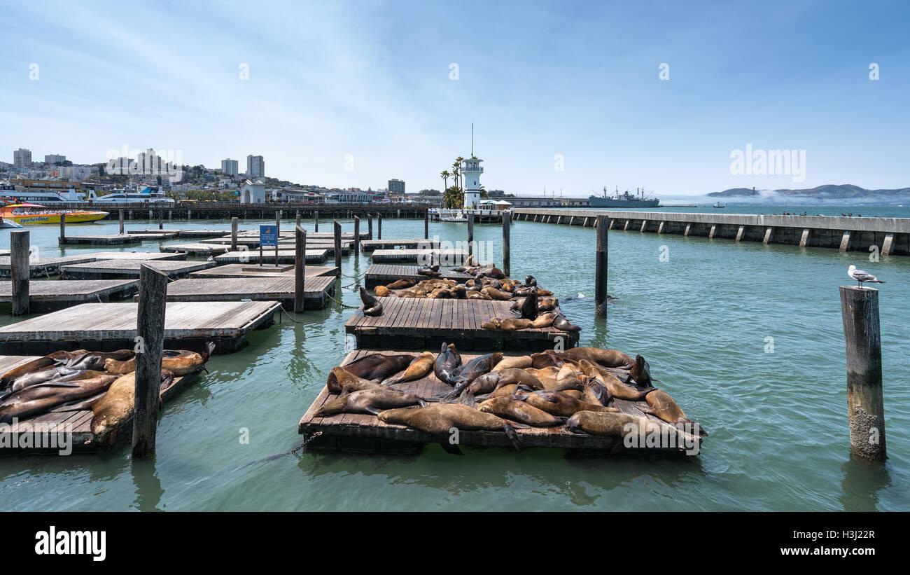 Sea lions at Pier 39 in San Francisco, California, United States of America, North America - Stock Image